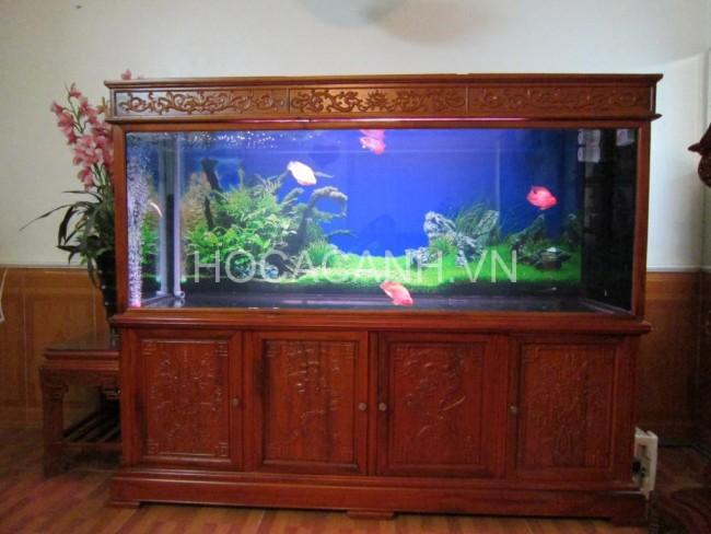 Bể nuôi cá rồng đặt trong nhà